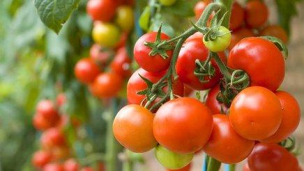 tomatoes-superfood
