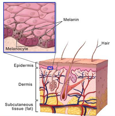 melanocyte-vitiligo-saturated