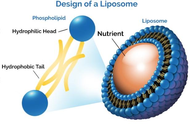 liposome-turmeric