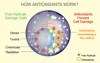 how-antioxidants-works_0