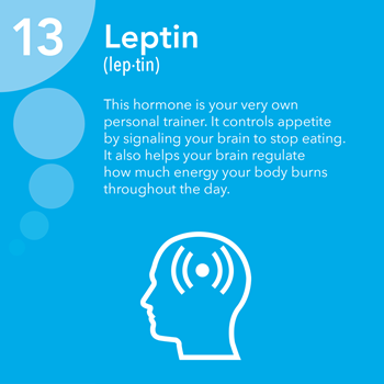 leptin3.png